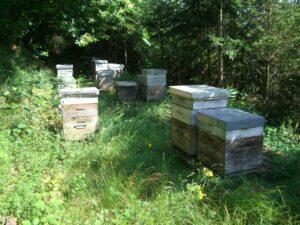 Un de nos ruchers